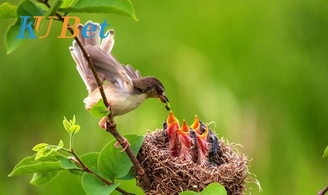 Một tổ chim con