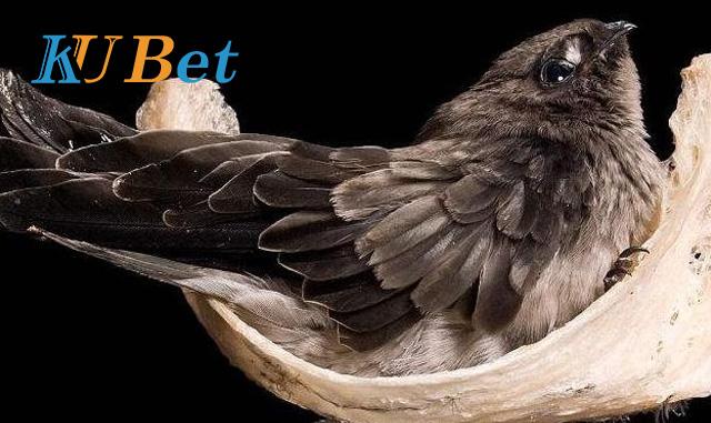 mơ thấy chim yến