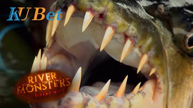 Xem cá hổ ăn thịt người