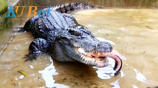 Xem cá sấu