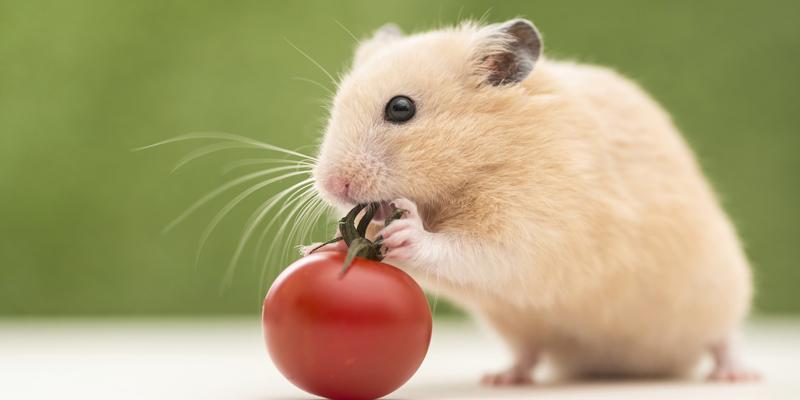 số tuổi chuột