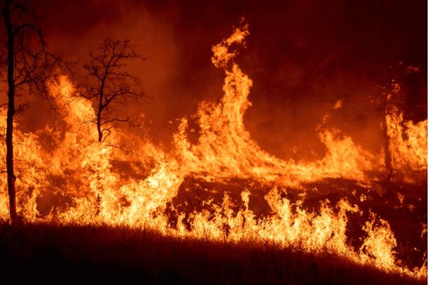 Cháy rừng nguy hiểm cho động vật