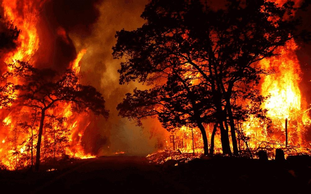 Những con số tốt khi mơ thấy cháy rừng
