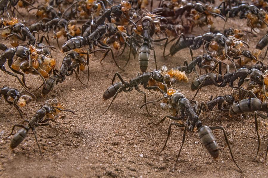 Nằm mơ thấy kiến bò cho thấy sức mạnh của tập thể đang đi đúng hướng