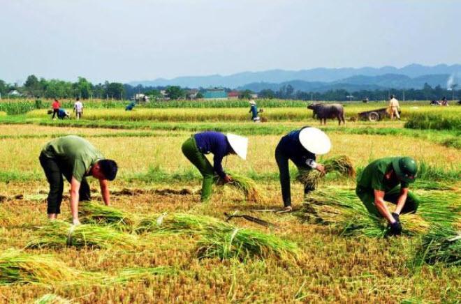 Mơ thấy cánh đồng đang thu hoạch