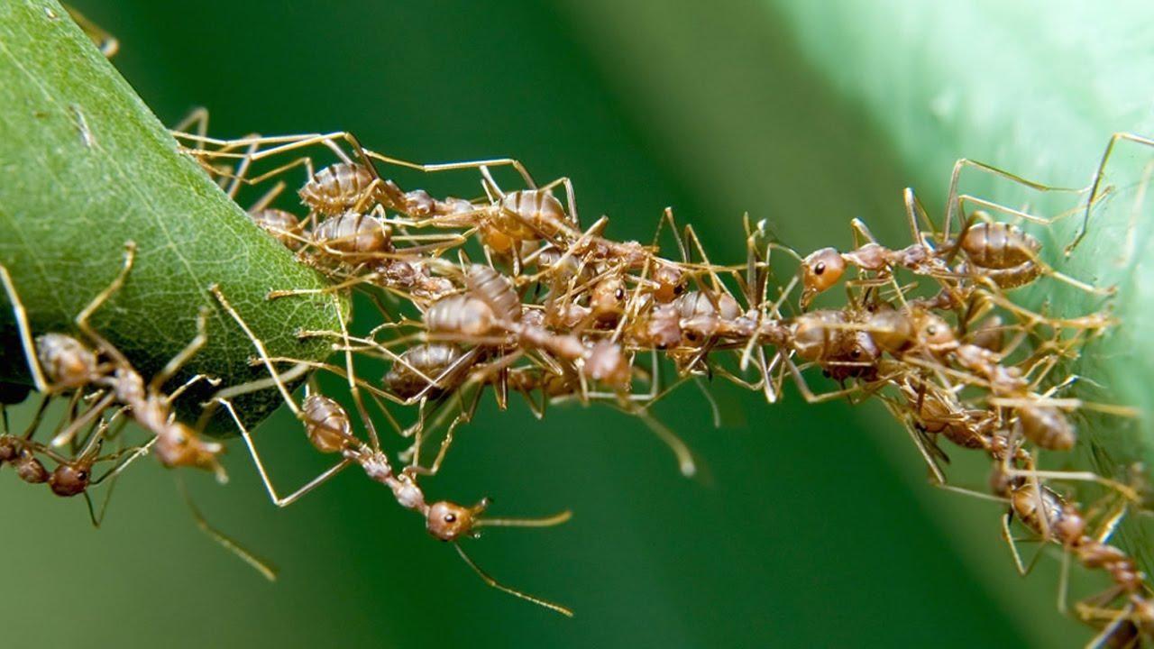 Chiêm bao mơ thấy kiến sẽ mang lại những điềm báo với những ý nghĩa khác nhau