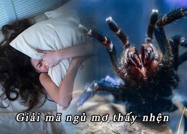 Ngủ mơ thấy nhện thường khiến chúng ta cảm thấy lo lắng