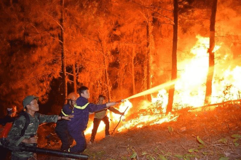 Gặp giấc mơ cháy rừng là điềm báo gì