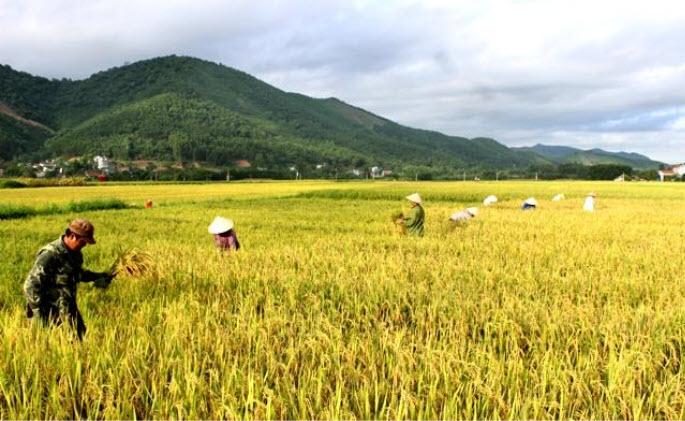 Nằm mơ thấy thu hoạch lúa chín đánh đề con gì